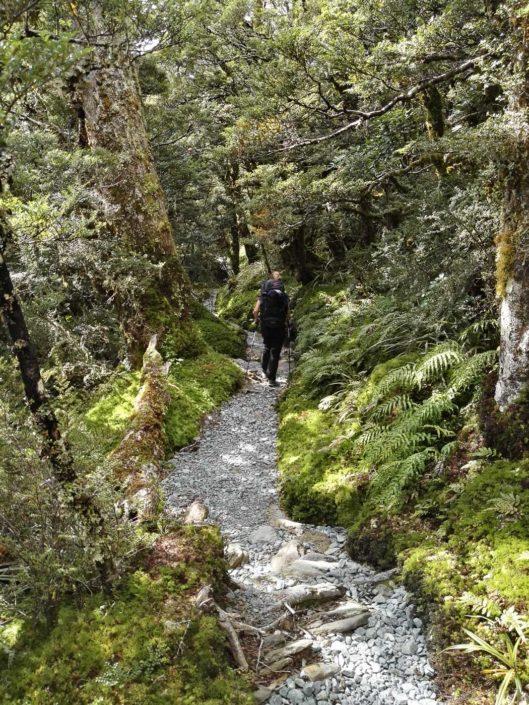Einfache Wege durch den Regenwald