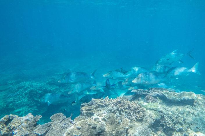 Schnorcheln in tieferen Gewässern