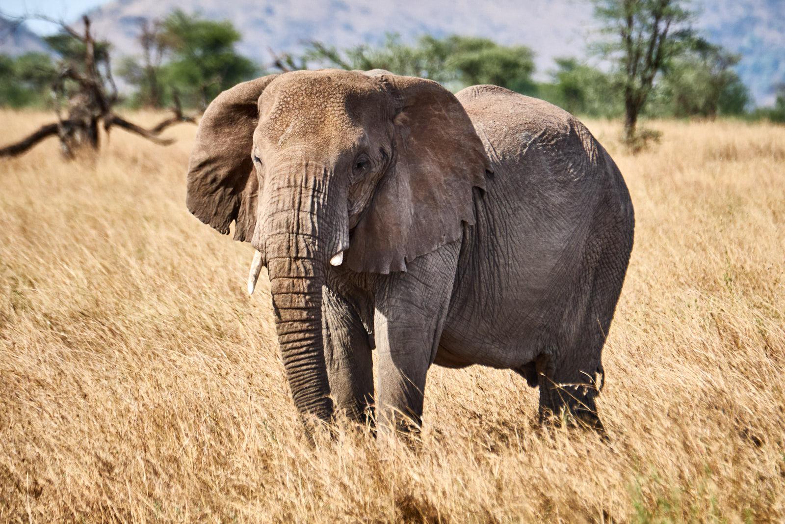 Elefantengruppe